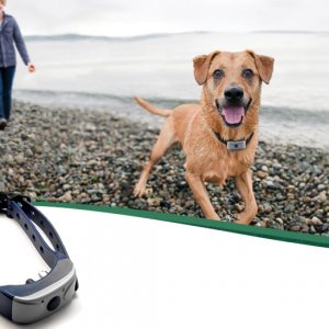 Anti Dog barking collar waterproof vibration and sound sensor