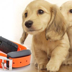 Dog Training Collar with Shock + Vibration + Tone Modes up to 300 mtr Range