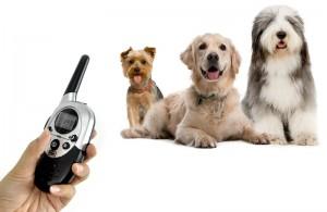 Dog Training Collar with Vibration