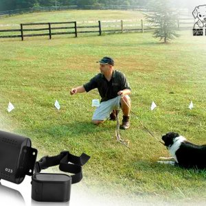 Electronic Pet Dog Fencing System