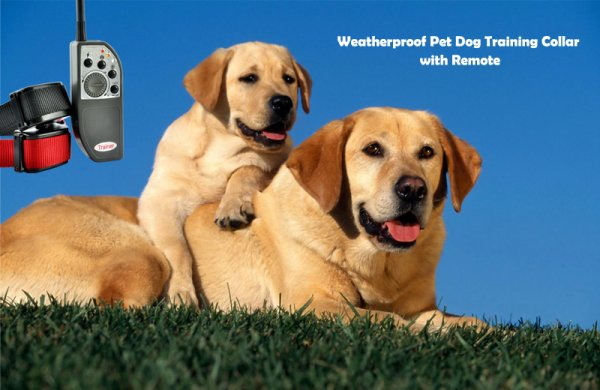 Weatherproof Pet Dog Training Collar with Remote Control