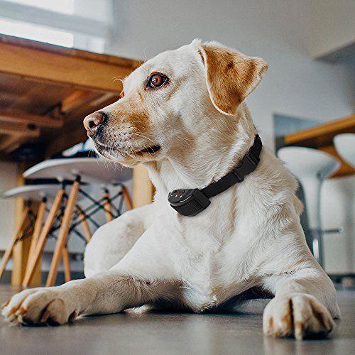 a dog with a collar