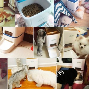 cats and dogs with a pet feeder